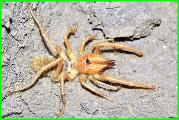 apa saja yang diperlukan oleh hewan yang hidup di padang pasir, hewan yang ada di padang pasir, binatang yang ada di padang pasir, hewan yang hidup di padang pasir, hewan yg hidup di padang pasir, hewan yang di padang pasir