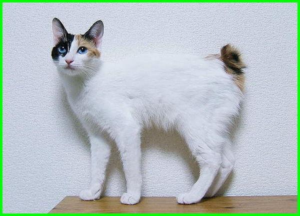 50 jenis kucing di dunia, 5 jenis kucing termahal di dunia, jenis jenis kucing dunia, macam macam jenis kucing di dunia, jenis jenis kucing di seluruh dunia, jenis kucing di seluruh dunia, jenis kucing ras di dunia, jenis kucing seluruh dunia, 3 jenis kucing