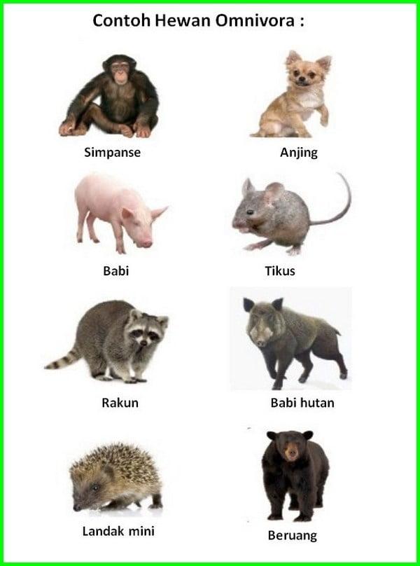 hewan omnivora adalah, hewan omnivora adalah hewan pemakan, hewan omnivora apa aja, hewan omnivora memakan, hewan omnivora beserta gambarnya, contoh hewan omnivora brainly, hewan omnivora contohnya, hewan omnivora contoh, hewan omnivora dan ciri-cirinya, hewan omnivora dan cirinya, ciri hewan omnivora, hewan omnivora dan makanannya, hewan omnivora dan penjelasannya, hewan omnivora dan jenis makanannya, hewan omnivora dan contohnya