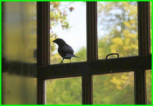 apa arti burung masuk kedalam rumah, arti burung masuk kedalam rumah, apa arti burung masuk ke dalam rumah, apa arti burung masuk dalam rumah, apa artinya burung masuk rumah, arti burung masuk rumah menurut islam, arti burung masuk ke dalam rumah, arti burung masuk ke rumah, arti burung masuk rumah, apa arti burung masuk ke rumah, makna burung masuk rumah