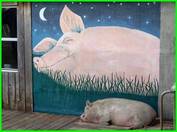 apa maksud mimpi babi, maksud mimpi babi, arti mimpi babi, tafsir mimpi babi, makna mimpi babi, apa makna mimpi babi, mimpi babi menurut islam, mimpi babi artinya, mimpi babi apa artinya, mimpi ada babi, mimpi babi di sembelih, mimpi gendong babi, mimpi babi menurut islam, mimpi babi artinya, mimpi babi apa artinya, mimpi ada babi, buku mimpi babi, tafsir mimpi babi, ramalan mimpi babi, buku tafsir mimpi babi, mimpi babi di sembelih, mimpi gendong babi, apa arti mimpi babi