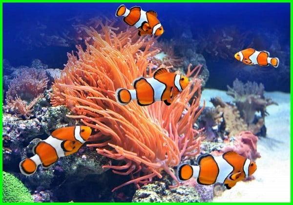 ikan tercantik di dunia, ikan tercantik sedunia, ikan tercantik di malaysia, ikan tercantik di air tawar, ikan tercantik adalah, foto ikan cantik dan unik, ikan aquarium tercantik, ikan aquarium tercantik di dunia, ikan badut