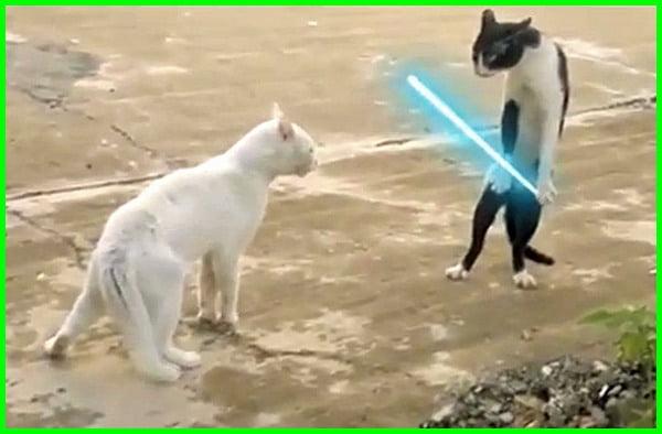 kucing bertengkar, kucing berantem lucu, kucing lagi berantem, anak kucing berantem, kenapa kucing berantem, kucing berantem depan rumah pertanda, gambar kucing berantem, kucing berkelahi 3d, kucing berantem sampai mati, foto kucing berantem, kucing garong berantem, penyebab kucing berantem, kucing kucing berantem, kucing berantem