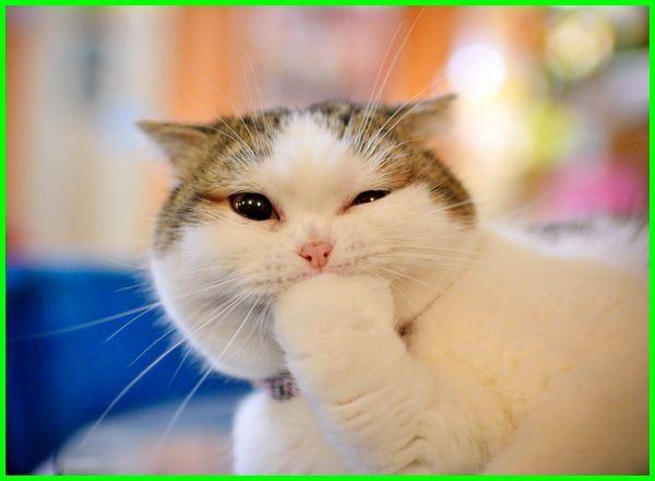 nama lucu untuk kucing, nama kucing lucu betina, nama nama kucing lucu jantan, nama kucing paling lucu, nama kucing yang lucu jantan, nama kucing lucu dan artinya, nama kucing yang lucu betina, nama kucing yang lucu dan unik, nama yang lucu untuk kucing laki laki, nama nama kucing lucu dan unik, nama kucing lucu betina dan artinya, nama kucing yang lucu untuk betina, daftar nama nama kucing lucu