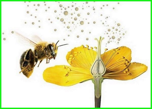 penyerbukan, penyerbukan adalah, penyerbukan silang, penyerbukan tetangga, penyerbukan bastar, penyerbukan sendiri, penyerbukan silang adalah, penyerbukan bastar adalah, penyerbukan sendiri adalah, penyerbukan bunga, penyerbukan bastar terjadi pada tumbuhan yang, penyerbukan alogami, penyerbukan pada bunga, penyerbukan pada tumbuhan