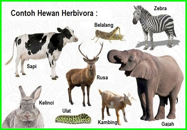 Contoh hewan herbivora, hewan pemakan tumbuhan disebut, hewan pemakan tumbuhan, hewan pemakan tumbuh tumbuhan, hewan pemakan tumbuhan adalah, hewan pemakan tumbuhan dinamakan, binatang pemakan tumbuhan, hewan pemakan tumbuhan dan hewan lain disebut, hewan pemakan tumbuhan disebut juga, jenis hewan pemakan tumbuhan, hewan hewan pemakan tumbuhan, ok google hewan pemakan tumbuhan disebut