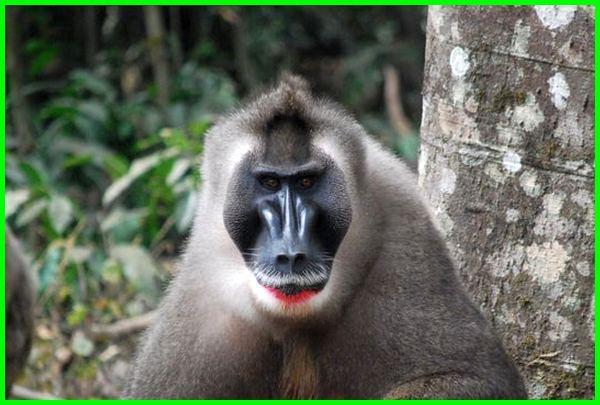 hewan yang dari huruf d, hewan huruf awal d, hewan dengan huruf awal d, hewan huruf depannya d, hewan yg huruf nya d