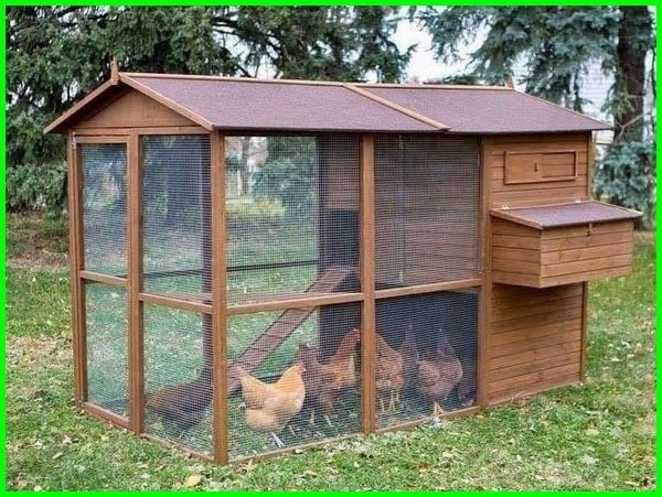 kandang ayam petelur, kandang ayam kampung, kandang ayam modern, kandang ayam sederhana, membuat kandang ayam, kandang ayam umbaran, cara membuat kurungan ayam, ayam petelur umbaran, ukuran kandang ayam petelur, kandang ayam kampung modern, kandang ayam kampunģ sederhana