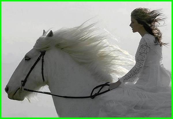 mimpi naik kuda, mimpi dikejar kuda, mimpi melihat kuda, arti mimpi naik kuda, arti mimpi dikejar kuda, arti mimpi kuda, tafsir mimpi kuda, mimpi naik kuda putih, mimpi kuda putih, mimpi melihat kuda putih, mimpi melihat orang naik kuda, arti mimpi naik kuda putih, arti mimpi kuda masuk rumah, arti mimpi kuda putih, mimpi menunggang kuda, arti mimpi kuda mengamuk