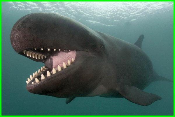 paus pembunuh palsu, false killer whale, paus pembunuh, ikan paus pembunuh palsu, paus pembunuh palsu adalah