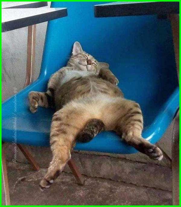 kucing mabok, kucing mabuk, kucing tidur terlentang, kucing tidur lucu banget bikin ngakak