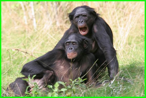 hewan yang tidak setia, hewan yang paling tidak setia, hewan yang tidak setia dengan pasangannya, binatang yang tidak setia, hewan yg tidak setia