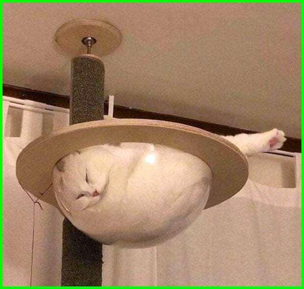 kucing tidur lucu banget, kucing lucu tidur anggora, gambar kucing tidur lucu, kucing lagi tidur lucu, posisi kucing tidur lucu, gaya tidur kucing lucu, kucing aneh lucu tidur, foto kucing tidur lucu, kucing tidur
