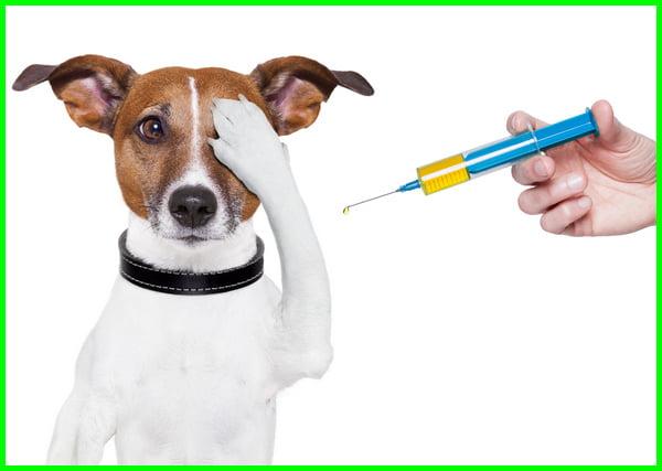 vaksin anjing, biaya vaksin anjing, harga vaksin anjing 2021-2022-2023-2024-2025, harga vaksin anjing umur 2 bulan, vaksin anjing pertama, cara vaksin anjing, vaksin anjing apa saja, harga vaksin anjing mini pom, vaksin anjing berapa, biaya vaksin anjing 2021