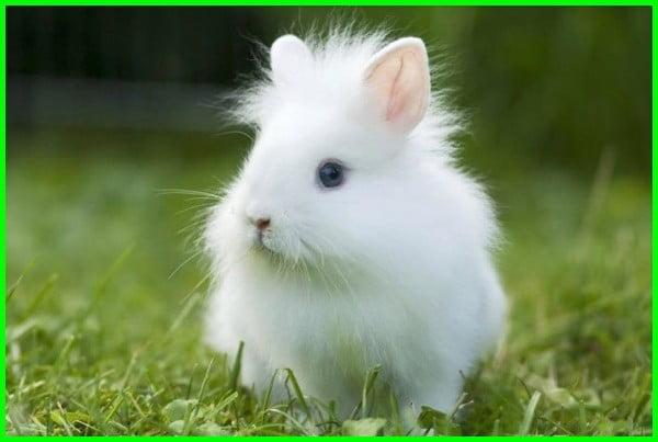 kelinci kecil imut, kelinci mungil, foto kelinci kecil, kelinci kecil putih, kelinci kelinci kecil, kelinci ras kecil