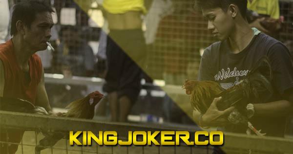 Kredibilitas Situs Sabung Ayam Live S128   DaftarS128