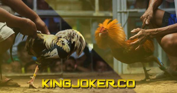 Loyalitas Situs Sabung Ayam Online S128   DaftarS1288