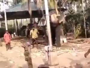 elephant playing cricket video viral