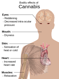 Physiological effects of dagga on the human body.
