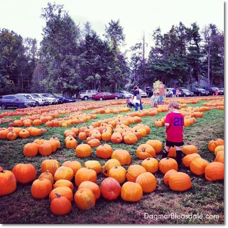 boy in pumpkin patch, fall, autumn