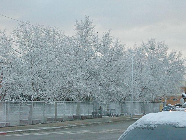 frozentreeswashschool2.jpg