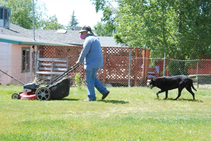 dog playing lawn mower ball