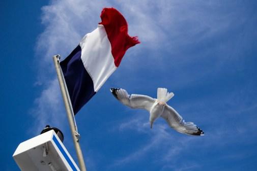 Drapeau français et mouette au vent.