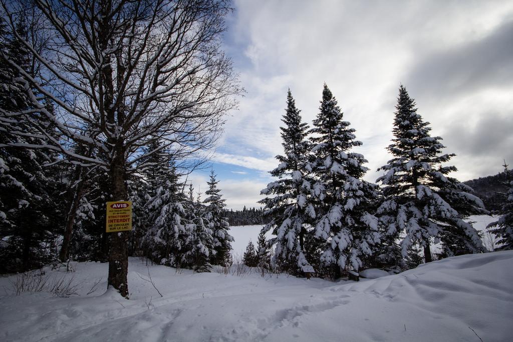 Arbres enneigées sur le Sentier des Caps.