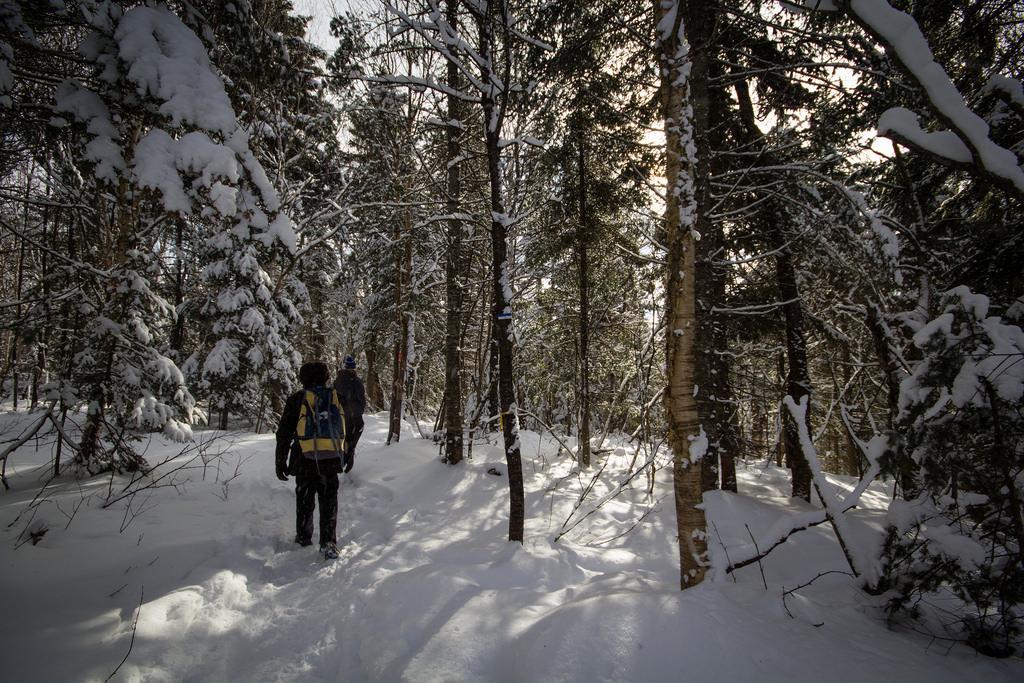 Promeneurs dans la forêt enneigée.