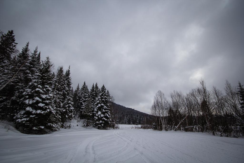 Chemin et forêt enneigés sur le Sentier des Caps.