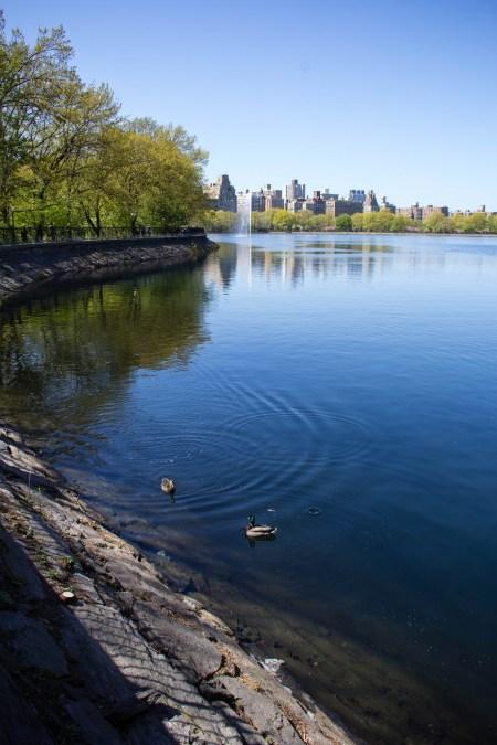 Bord de lac à Central Park.