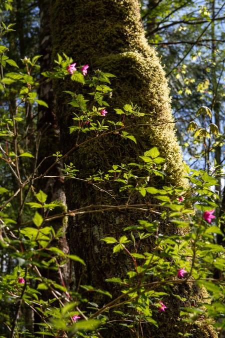 Gros plan sur les fleurs et la mousse.