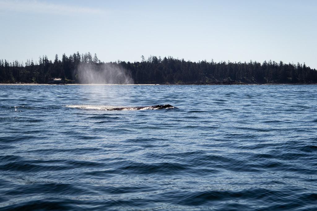 Petit aperçu de baleine.