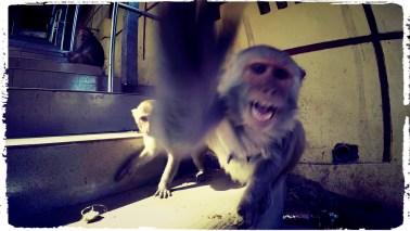 burma monkey, myanmar monkey, monkey temple, mount popa myanmar, crazy monkeys, dagsvstheworld, motorcycle through Myanmar, motorcycle through Burma