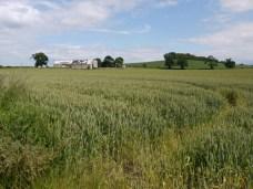 Cycle Route 76 - Farmland near Clackmannan