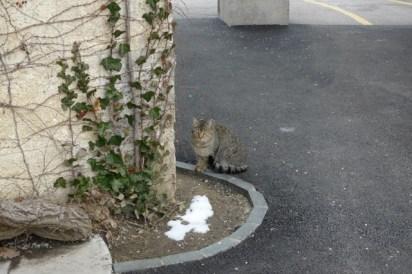 Mirogoj Cemetery Cat
