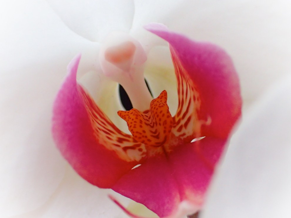 Another Orchid
