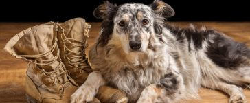 Veteran's Dog (Credit: Shutterstock)
