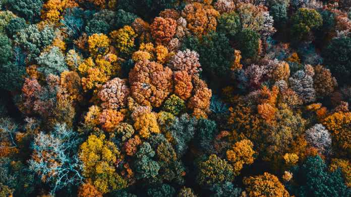 multicolored trees growing in autumn woods in daytime
