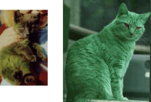 greencat1