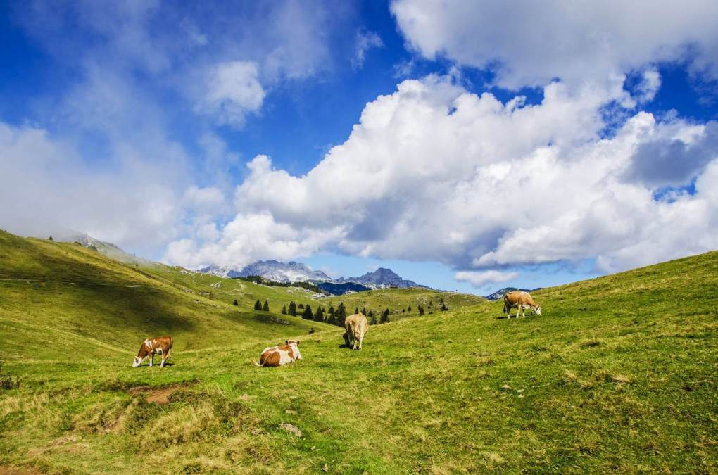 agriculture alps animal background