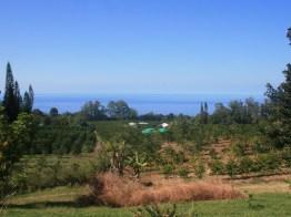 View_lg