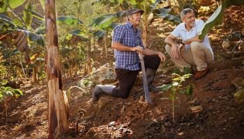 Nespresso rewards tree plant donators in Puerto Rico Nespresso_Reviving_Origins_George_Clooney_Jose_Arroyo_1
