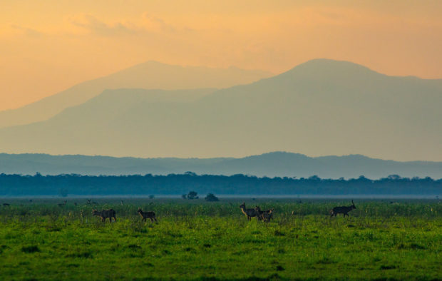 Mt Gorongosa