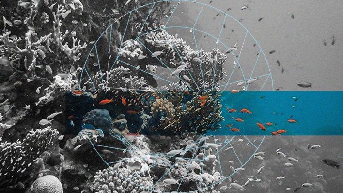 Resif (REEF): Son Gelişmeler, Topluluk, Gelecekteki Olaylar