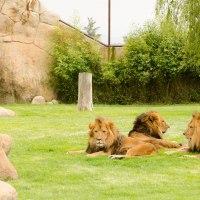 Watching Animals