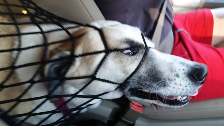 NOT THE SMARTEST DOGS – Derpy Dogs – LAUGH Compilation