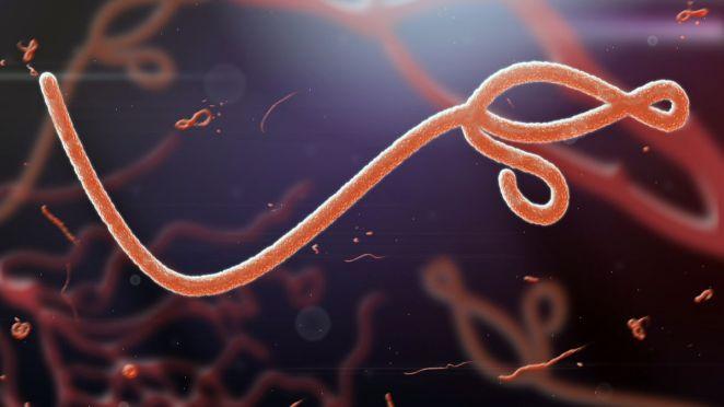 Ces virus sont les plus susceptibles de déclencher la prochaine pandémie, selon les scientifiques