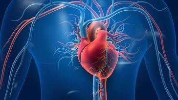 les jeunes adultes présentent des signes de dommages cardiovasculaires durables