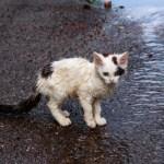 Une retraitée lègue sa maison pour la transformer en refuge pour chats abandonnés